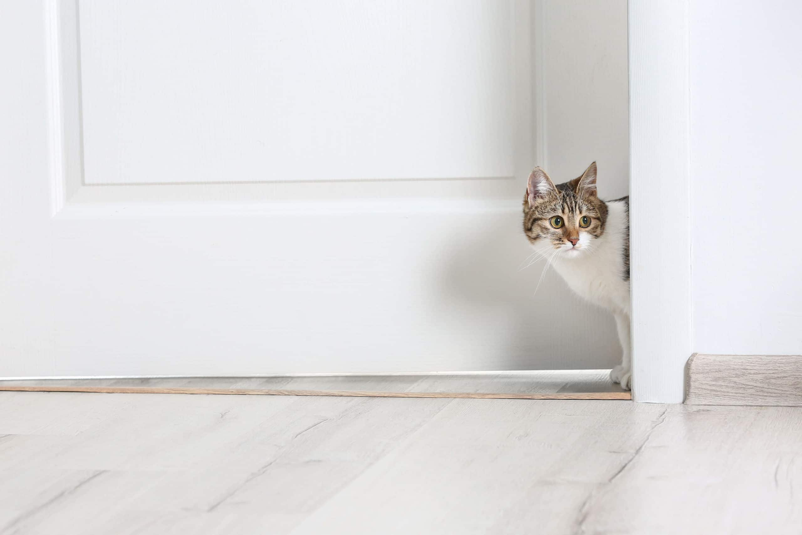 Cat sneaking out of door